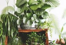 plants   leaves