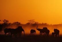 Wildlife / Prachtige foto's van de dieren die onze planeet rijk is! / by Rondreis.nl