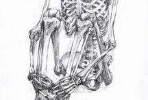 poses & anatomia