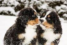 Pets in the snow! / Make sure you're keeping your fuzzy friend warm! / by CozyWinters