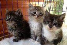 Kitties / Cuteness / by maria