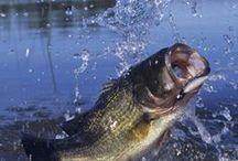 Gone fishing, kalastamassa