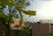 My Photography / In love with photography!!! As an Amateur photographer learning the skills of photography☺