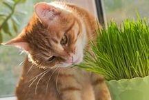 Jardinagem / Projetos de jerdins e dicas para você cuidar das suas plantas