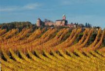 Route des Vins d'Alsace / Surement la plus belle au monde