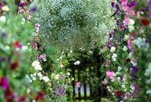 Beautiful gardens and courtyards