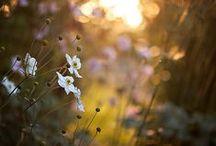 My  dream Garden......