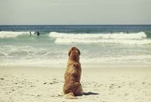 Beach Dogs / Is there anything greater then an awesome beach dog? We don't think so either! ;)