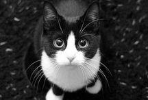 Pretty cats! / 癒しになるネコちゃん達