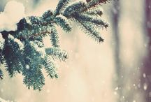 Lovely winter