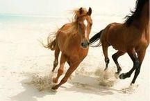 horses / by Sabrina Loveless