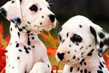 Cute animals / Cute animals :)