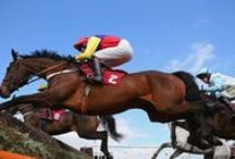 Horse Racing / Horse Racing Images