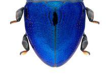 Biologia: hyönteiset ja hämähäkit = insects and arachnids / Hyönteiset ja muut pikku vipeltäjät esim. kuvaamataidontöiden inspiraatioksi