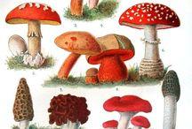 Biologia: sienet