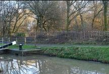 Wey & Arun Canal Conservation / As the Wey & Canal Trust progresses with restoration of the canal, it is important to protect existing natural habitats and also enhance the canal corridor  to make conditions more favourable for wildlife.