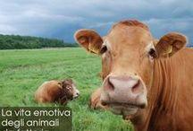 Animali da fattoria / I nostri amici animali