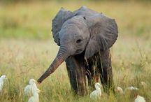 The Four Leggeds / Bears, Elephants, Moose, Giraffes, Otters...