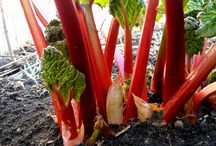 Garden Veggies & Fruit / Garden vegetables