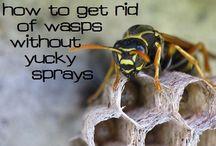 Garden Pests ~ Remedies / Controlling garden pests