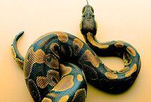 Serpent & La  t o r t u e / La puissance du serpent  La sagesse de la tortue  / by Karola