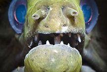 Under Water Creatures / #unusual #beautiful #underwater #creatures #odd #strange #nature #fish #species  / by 🌷💕 Iris S.S. 💕🌷