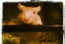 Mascotas de Vida Salvaje / #Mascotas que viven con nosotros. Uno mas de la familia de Vida Salvaje  http://www.vidasalvaje.net/