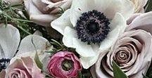 FLOWER ✿ /