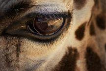 giraffes en olifanten en andere Afrikaanse dieren