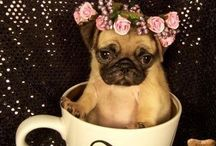 Pugs / My babies friends and relations / by Robin Harley