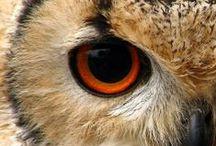 Owl-my God :D