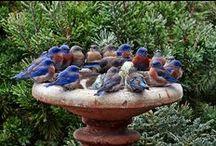 Birds end squirrels_Ptáci a veverky / Budky, krmítka
