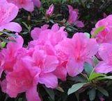 A Magia das Flores / As flores têm certa magia, fazem parte da harmonia ecológica do universo, são o símbolo da paz e da beleza.