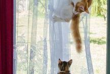 Cats Big & Small / by Shawn Gilligan
