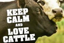 Cattle / We LOVE cattle!