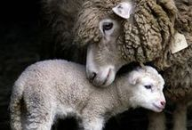Animal families / Animal babies with their parents