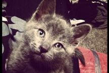 my sons kitten :) / My sons kitten is the cutest :) his name is romeow