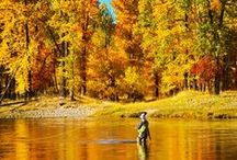 Fly Fishing in the Fall could be your new Happy Place / Fly Fishing may be man's best kept secret - but many women are catching on. Sisters on the Fly creates an environment where it's easy to try new things - like fly fishing in the fall!   These low-key but splendid adventures are usually accompanied by an evening around the fire with martinis, laughter and of course, a fresh-catch dinner!   Get the inside story on Sisters' and Fly Fishing on our blog: http://bit.ly/1XCEcbv / by Official Sisters On The Fly