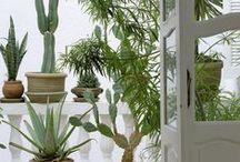 Garden / www.barefootstyling.com Inspiring Gardens / by Barefoot Interior Styling