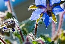 Plants that heal