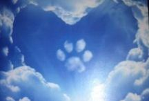 Pet Loss Counseling / Grieving the loss of your beloved family member.