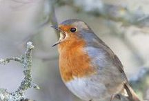 birds / by Sandi Gileo