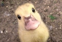 Crazy Cuteness / by Holly Ducky