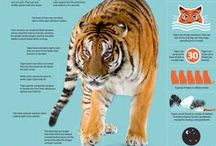 Tigers / Tigers are so beautiful and fascinating 🐅  Here is a celebration of the wonderful animal / by Hiten