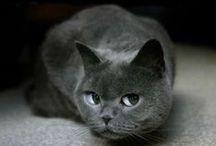 CATS / by Sandi Gileo