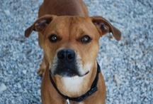Adoptable Dogs / These dogs are available for adoption!
