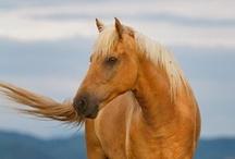 Horses / by Sandi Hughey