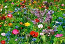 Gardening Tips and Tricks / random gardening tips and tricks from around pinterest