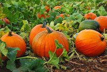 Pumpkins / Pumpkins