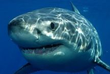 Shark Week Fun / Fun family activities for shark week / by Light Table Guide